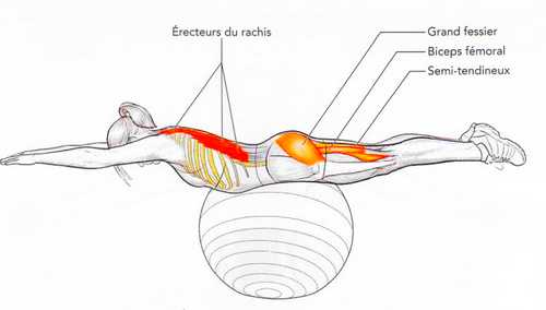 Extension sur ballon de gymnastique en position ventrale
