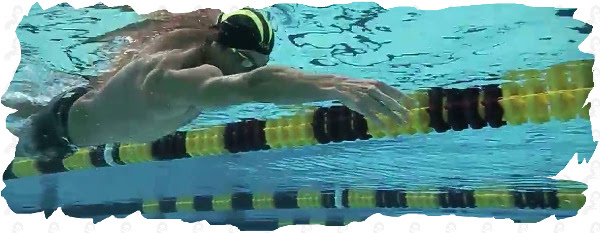 freestyle drill swimming