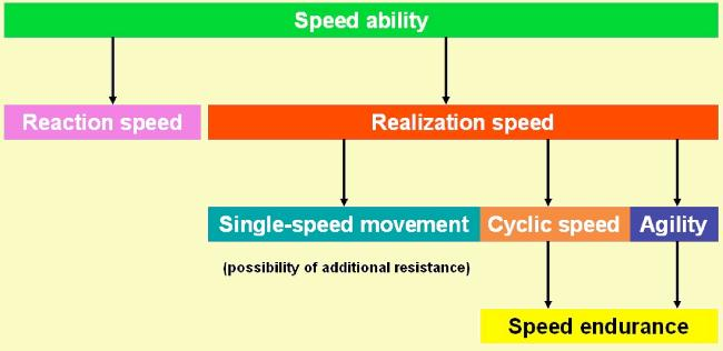 Significant areas of the complex of speed abilities